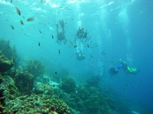 Buceo en Punta Perdiz