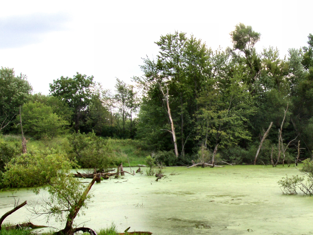 Humedal en Indiana, Florida
